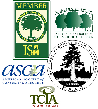 Member Associations