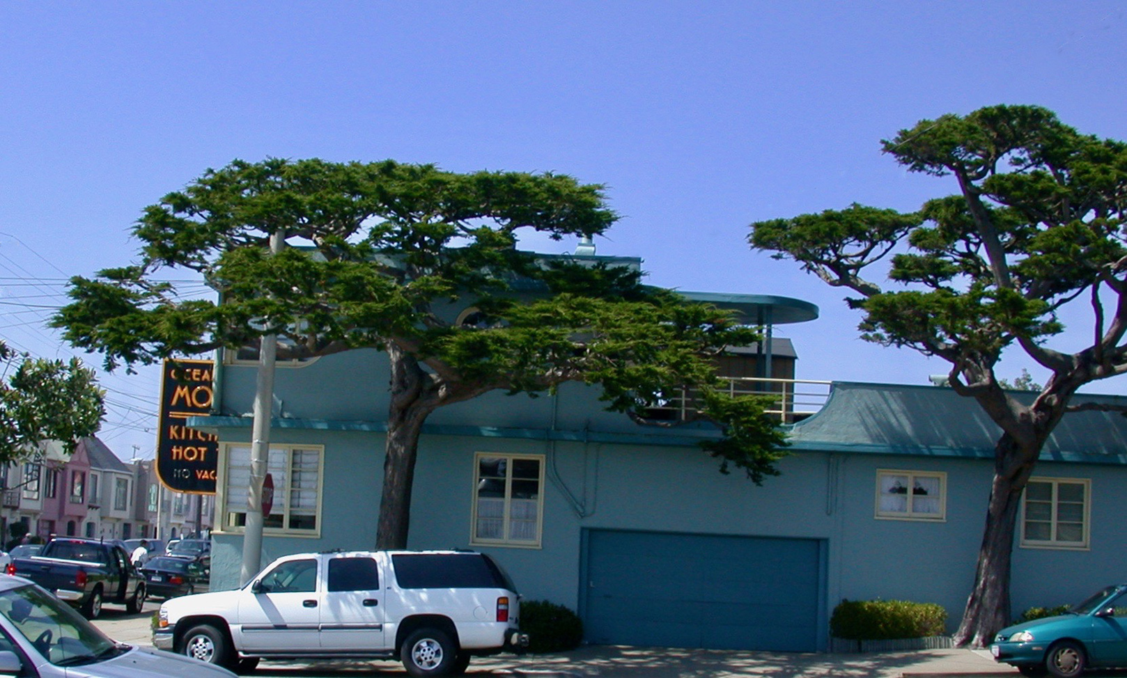 Monterey Cypress: Cloud Pruning